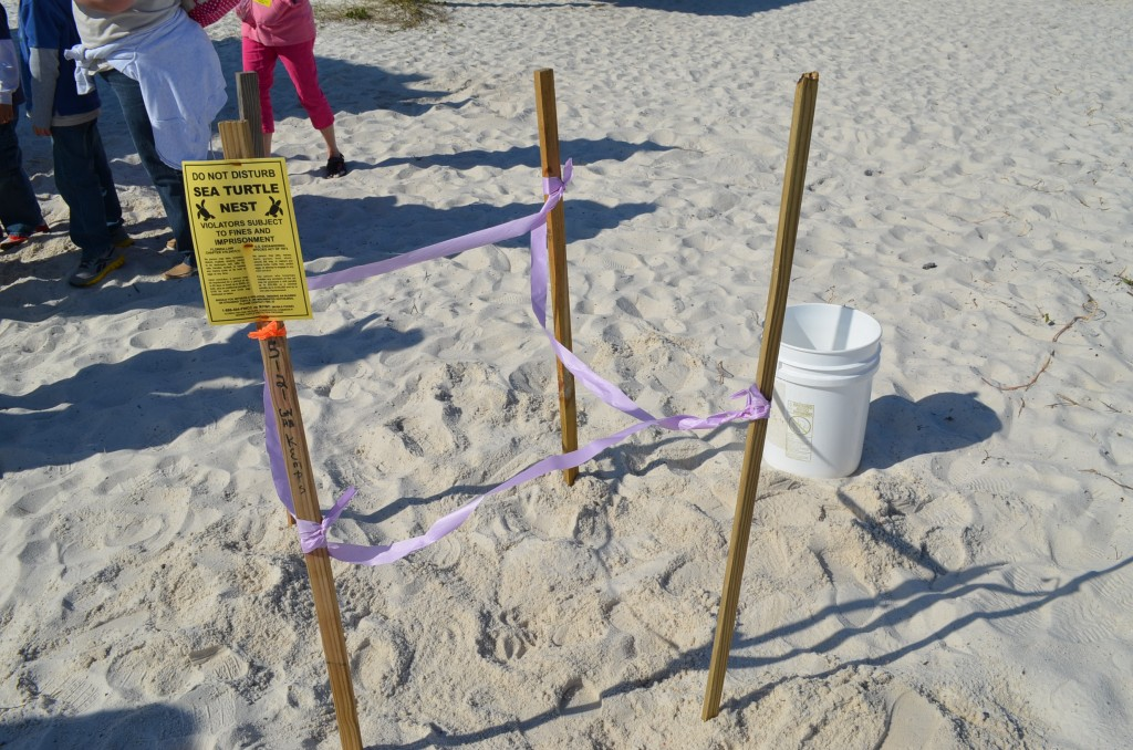 The kids learned about how a turtle egg site is marked on the beach.