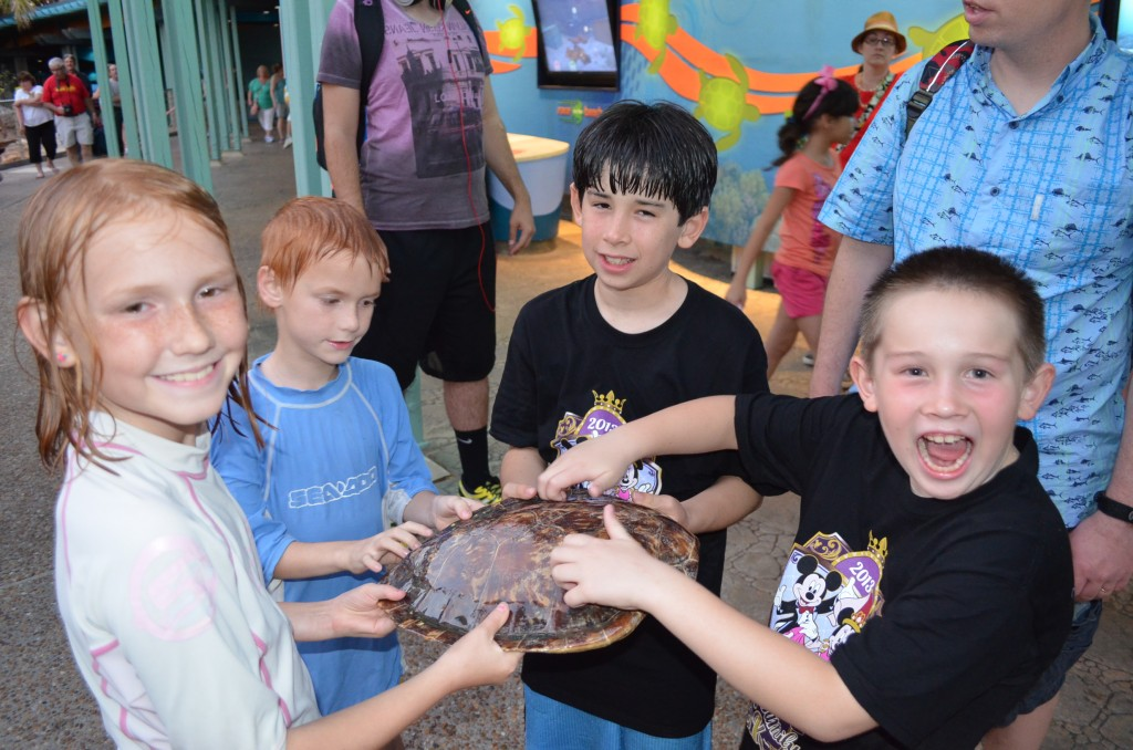 Learning about sea turtles.