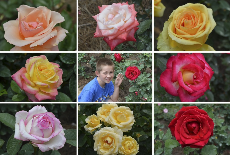 Timmy was helping me find pretty flowers to photograph in the rose garden. I was in heaven with all the roses!