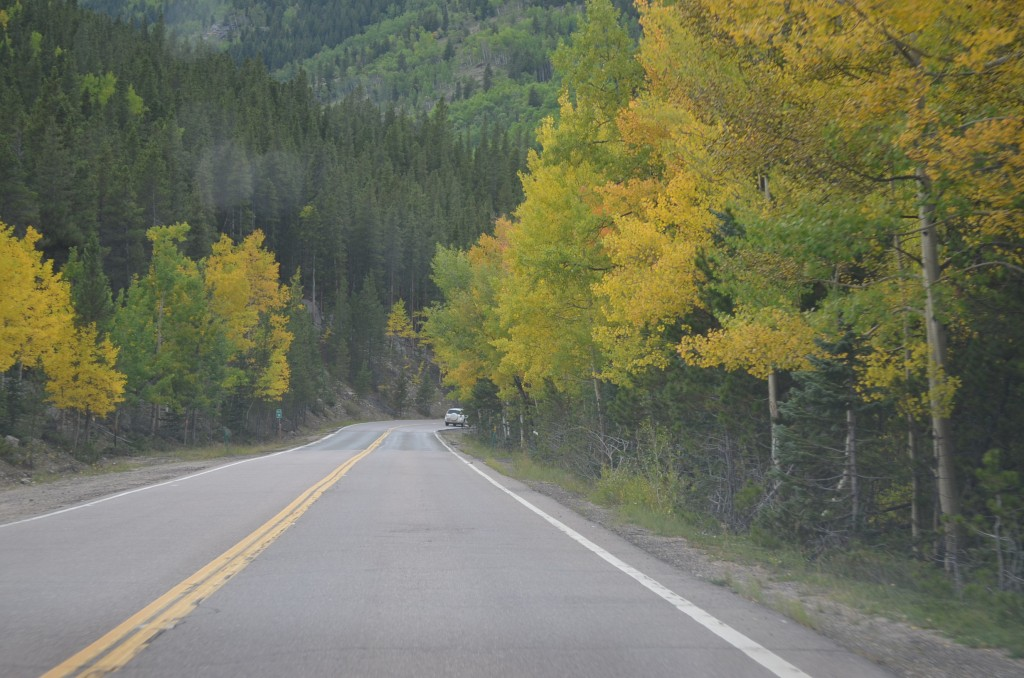 The aspen were just starting to turn gold!