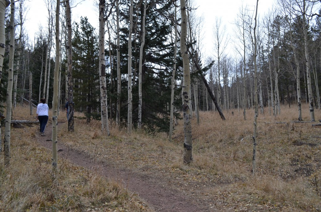 There's a pretty aspen grove about halfway up. It's a nice break from the crazy terrain.