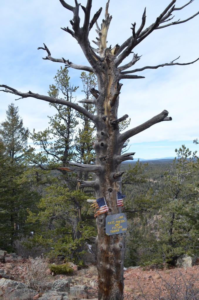 This tree was nice. Considering we did the hike over Veterans Day.