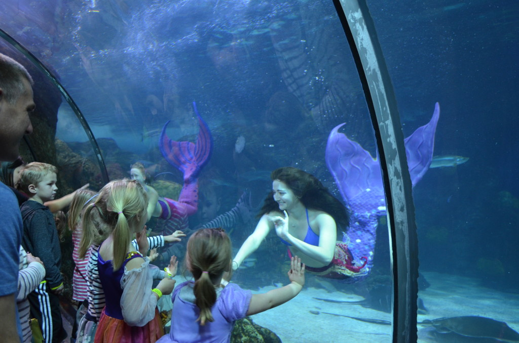 I'd never been to an aquarium with REAL LIVE MERMAIDS before; those little girls were mesmerized!