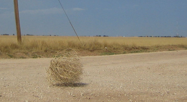 To see tumbleweed rolling around in my community is downright comical to me!