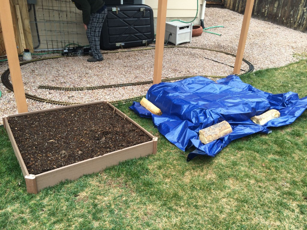 The strawberries are on the right. Under the tarp. It experienced 1-2 days per week of being covered until about Memorial Day. Crazy Colorado Weather....