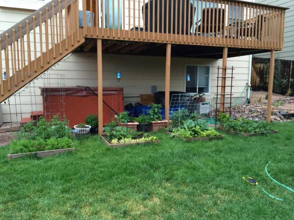 My backyard garden. It isn't big, but it's been a great time seeing what can (and what cannot) grow in Colorado.