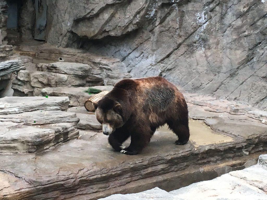 2016 05 07 Denver Zoo Red Panda - 25
